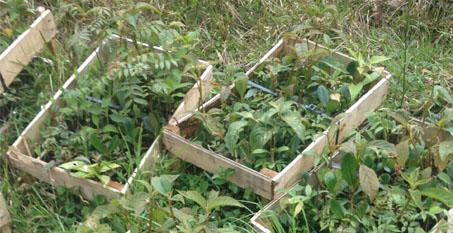 Plántulas De Especies Nativas Para La Siembra