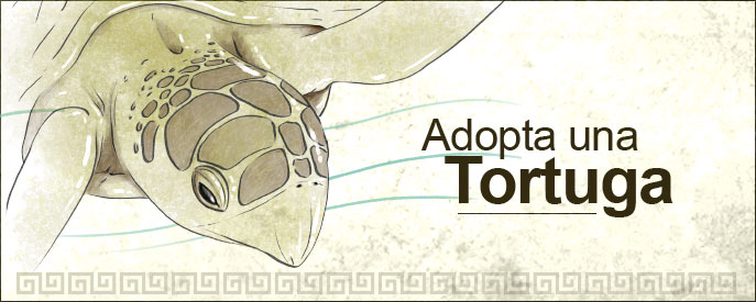 programa-adopta-una-tortuga-fundacion-natura