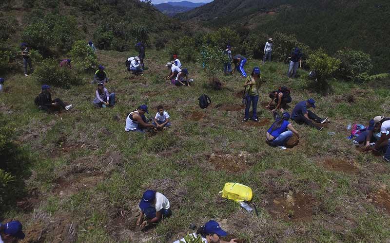 Plantaciones Protectores Así Como Restauración De áreas Degradadas Y Protección De Cuencas Hacen Parte De Los Objetivos Del Proyecto