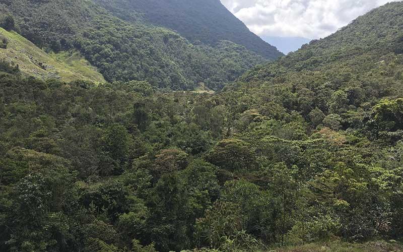 Se Espera Que La Compensación De Emisiones Se Concrete En Actividades Como La Siembra De árboles En áreas De Conservación Y Restauración