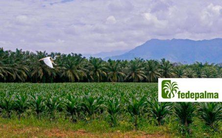 El proyecto entre Fedepalma y la Fundación Natura busca diseñar e implementar planes ambientales y productivos que mejoren las condiciones de sostenibilidad a largo plazo de la actividad palmera