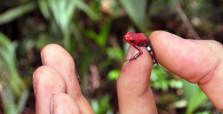 reserva-cachalu-natura (11)