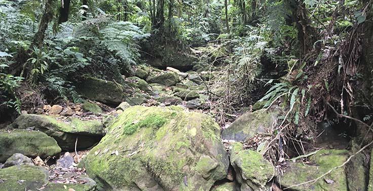 reserva-cachalu-natura (13)