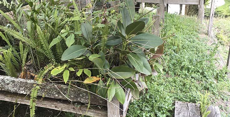 reserva-cachalu-natura (17)
