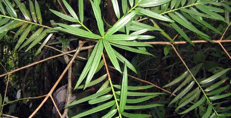 reserva-cachalu-natura (3)