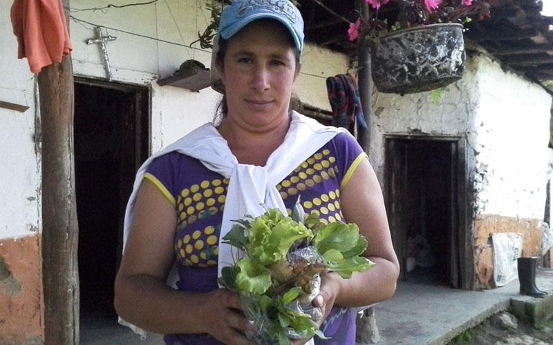 Oferta Local De Hortalizas Sostenibles