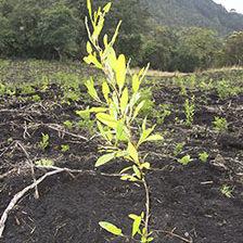 Dirección Ejecutiva - Fundación Natura Colombia