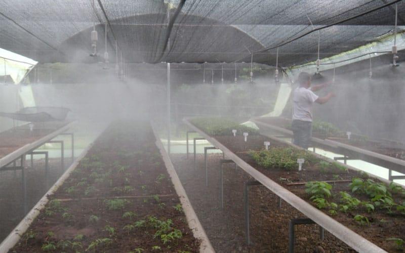 Sistema De Riego Nebulizado Vivero Finlandia
