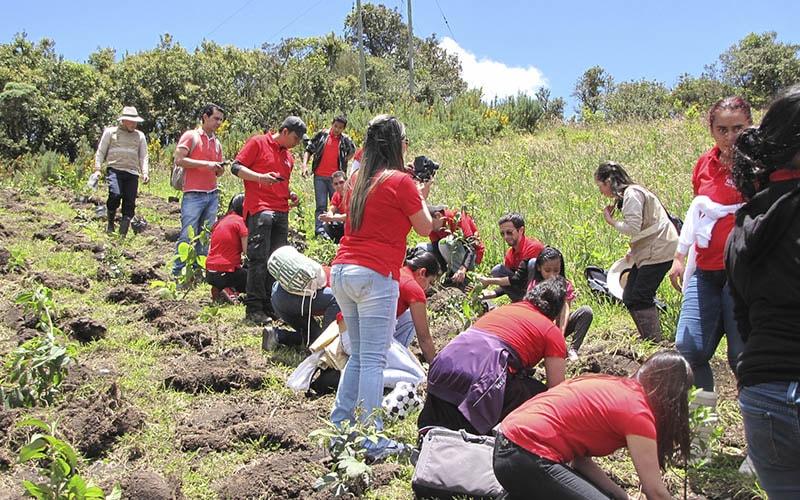 Contribución Participativa A La Restauración Del Bosque.