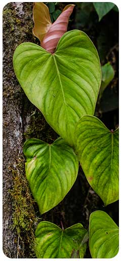 fundacion-natura-colombia