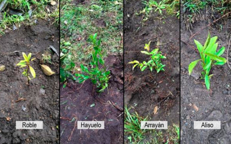 Arboles sembrados de diferentes especies siembra coca cola