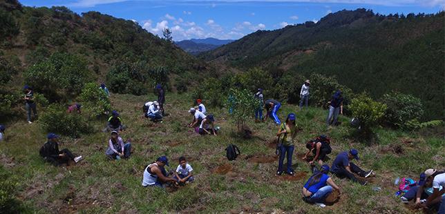 Reforestación Que Está Impulsando La 'Carrera Verde' Impacta Ahora En Reserva El Silencio (Antioquia)