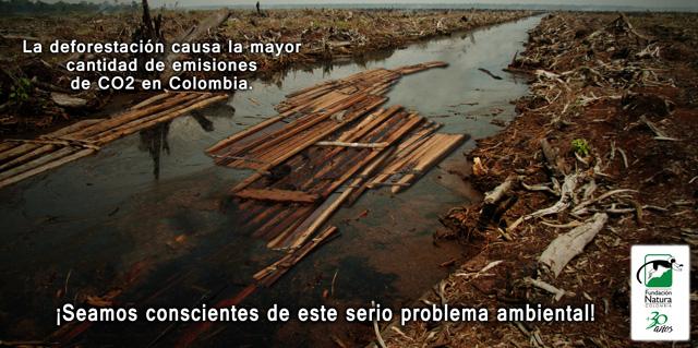 Deforestacion WEB