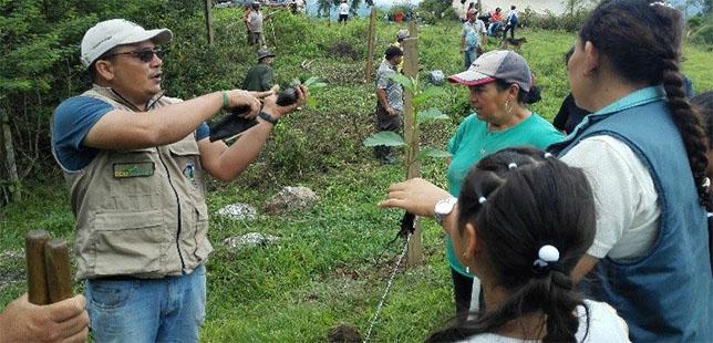 BOLETÍN/ En Cáqueza, Reforestan Vereda Palo Grande Con 200 árboles Para Proteger Alrededores De La Laguna Verde