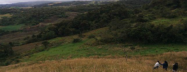 BOLETÍN/ Identifican Cómo árboles Aislados Conectan La Fauna Y El Paisaje En El Oriente De Cundinamarca