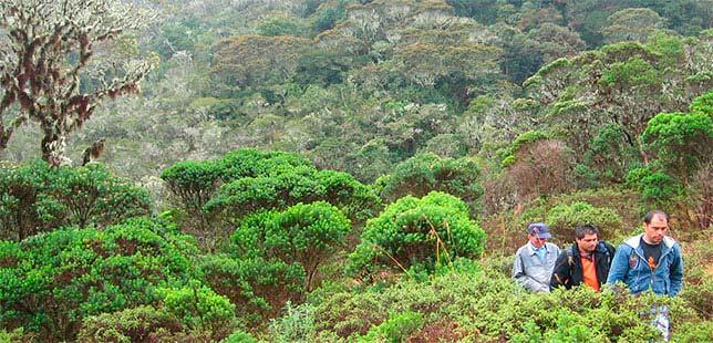 EDITORIAL/ ¿Por Qué Hacemos Una Carrera Atlética Para Restaurar Nuestros Bosques?