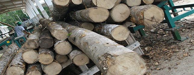 Los Retos De Las Cadenas De Valor Para Reducir La Deforestación