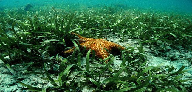 Lanzan Acción Que Promoverá Conservación De Biodiversidad En Manglares Y Pastos Marinos En El Caribe