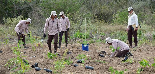 En El Quimbo, Terminó Implementación De Estrategias Piloto Para La Restauración Ecológica Del Bosque Seco Tropical