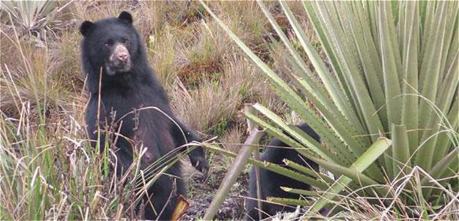 Foto: Parques Nacionales Naturales (PNN).