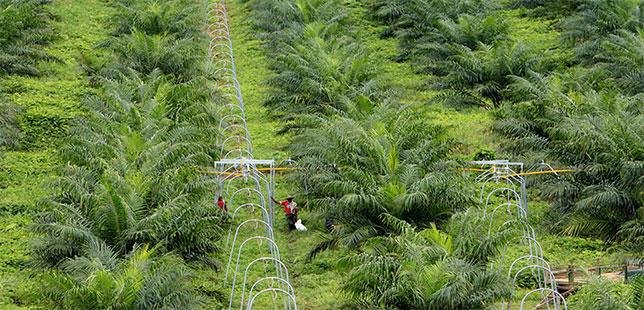 La Red De Agricultura Sostenible (RAS) Expande Su Trabajo Para Acelerar La Transformación Agrícola