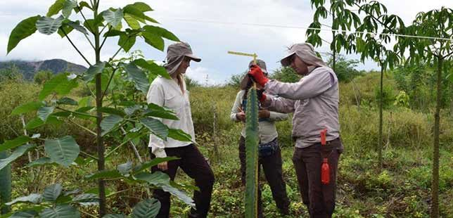 Plan Piloto De Restauración Ecológica Tiene Su Primer Pasante Extranjera