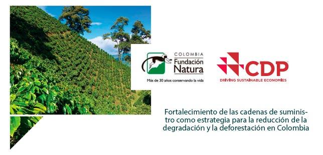 Fortalecimiento De Las Cadenas De Suministro Como Estrategia Para La Reducción De La Degradación Y La Deforestación En Colombia