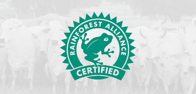 Certificacion Rainforest Alliance A Ganaderia Sostenible En Colombia Fundacion Natura