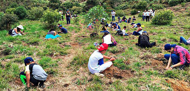 Correr Por Los Bosques Con La Carrera Verde Colombia