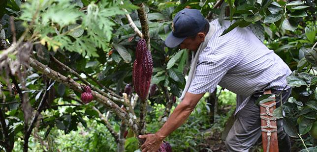Agricultores Se Preparan Para El Fenómeno De La Niña