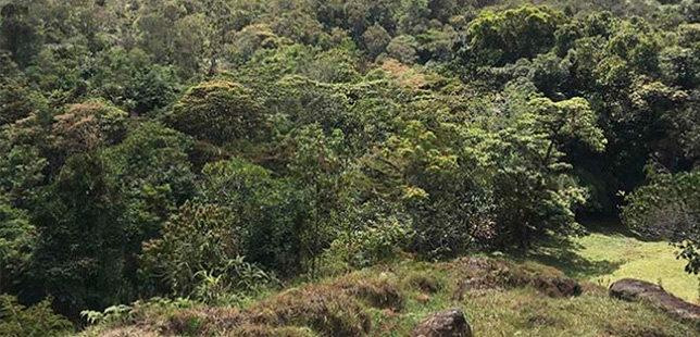 Reserva Biológica Cachalú, Un Ejemplo De Restauración De Bosque De Roble En El País