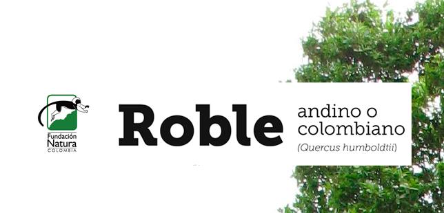 Roble Andino O Colombiano Fundacion Natura Colombia
