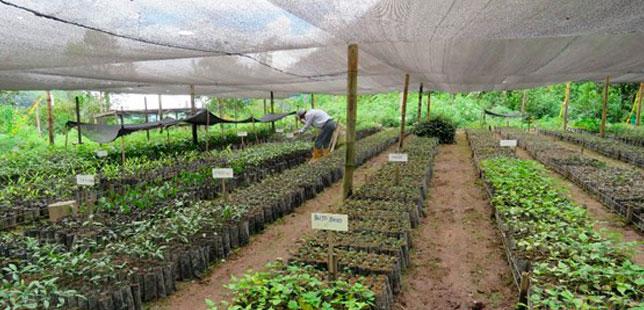 Alianzas Estratégicas Para La Restauración Ecológica En Santander