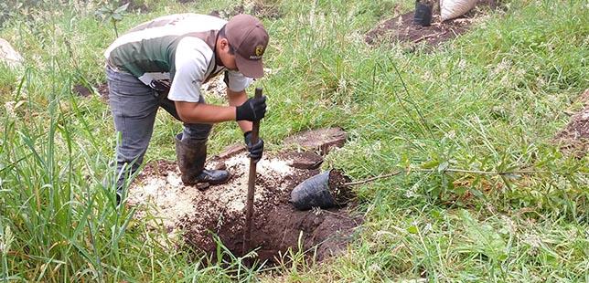Implementación De Acciones De Restauración Por Levantamiento De Especies Vedadas En Bojacá