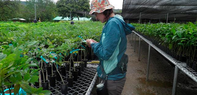 Inicia Trabajo De Campo De Segunda Tesis Doctoral En área De Restauración Ecológica Del BST